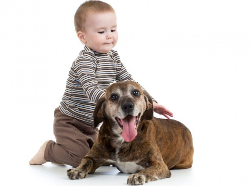 Pas čuva i od astme