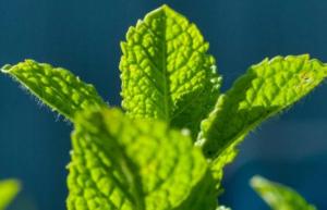 Blagotvorna nana – prirodni lek za decu